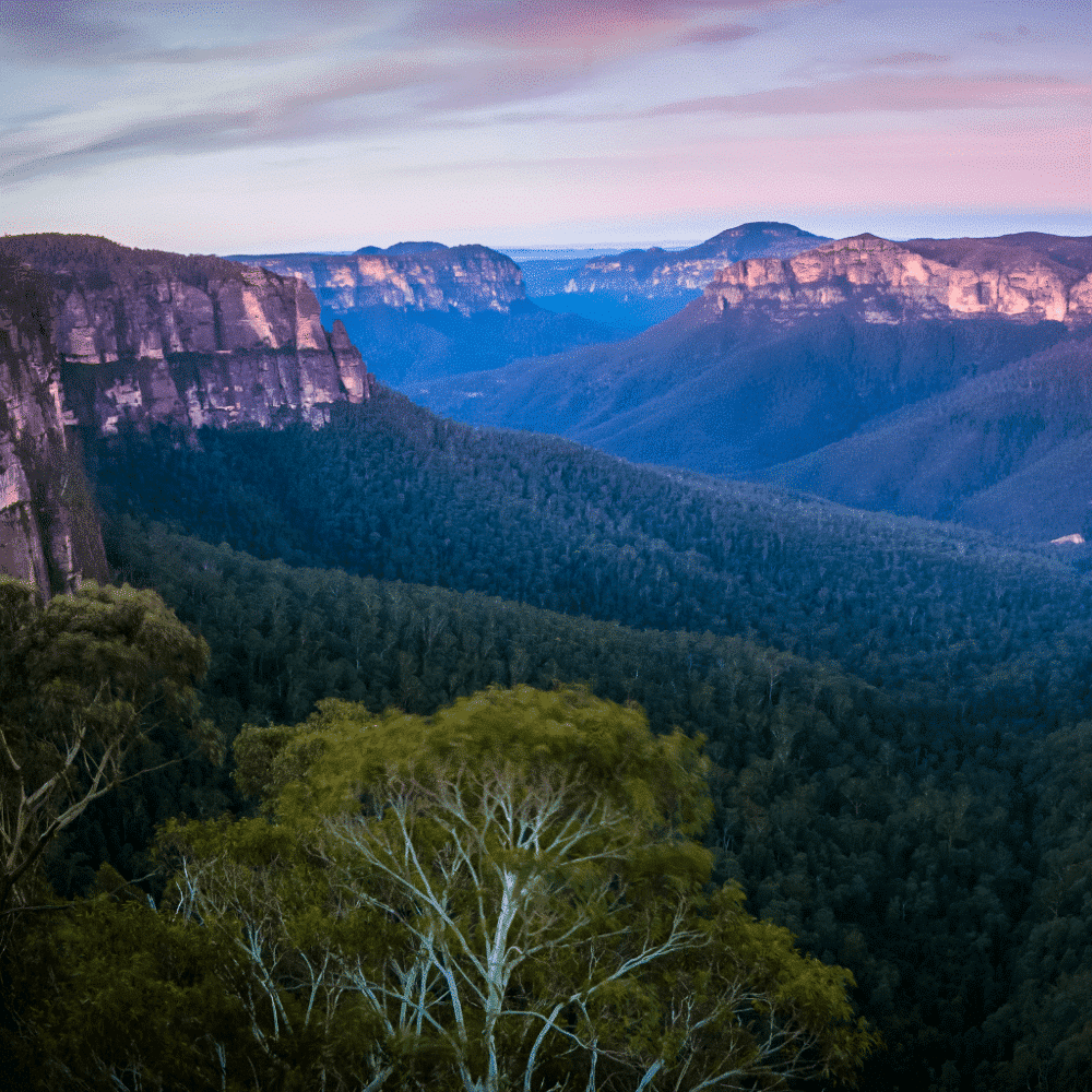 Organise trip to Blue Mountains